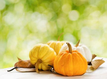 large pumpkin: Pumpkins on green natural background.