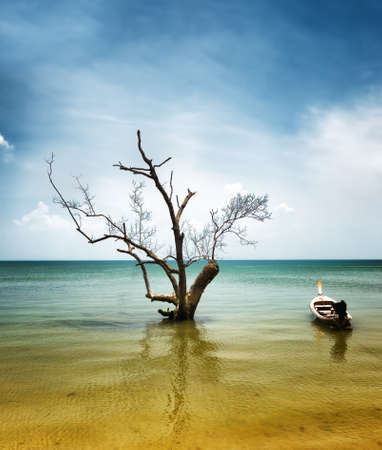 Dry tree and boat in water  photo