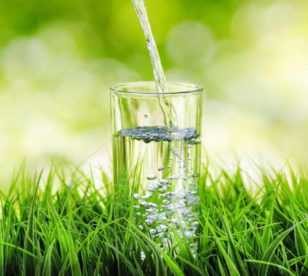 agua purificada: Vaso de agua sobre fondo de naturaleza.