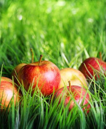 arbol de manzanas: Manzanas rojas en hierba verde. Foto de archivo