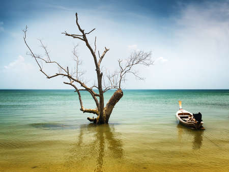 Dry tree and boat in water. photo