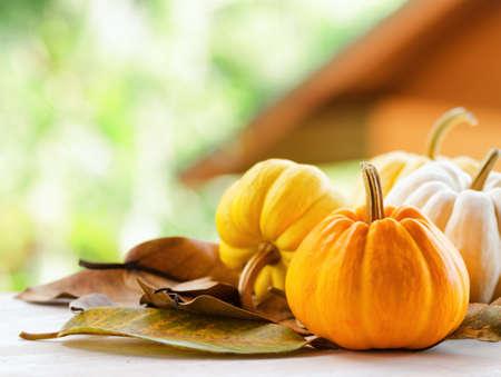 Pumpkins on rural landscape background. Stock Photo