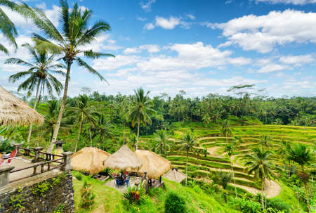 Ricce terrace of Bali Island, Indonesia.