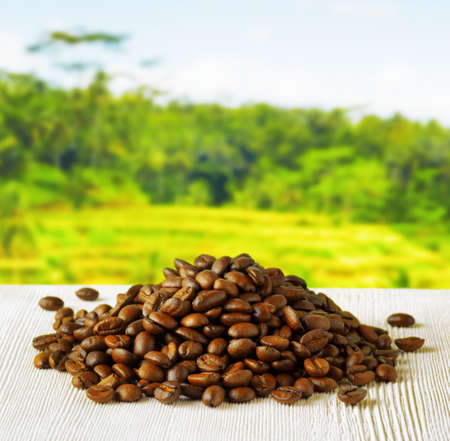 Coffee beans on highlands background. photo