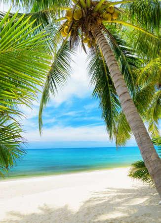playas tropicales: Árbol verde en una playa de arena blanca