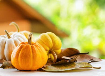 large pumpkin: Pumpkins on rural landscape .
