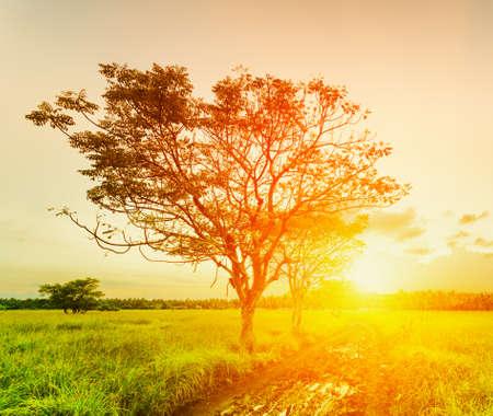 Un albero al tramonto tempo Paesaggio estivo