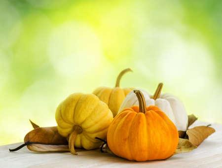 large pumpkin: Pumpkins on green natural background