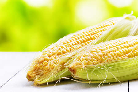 Two corn cobs on a garden table.
