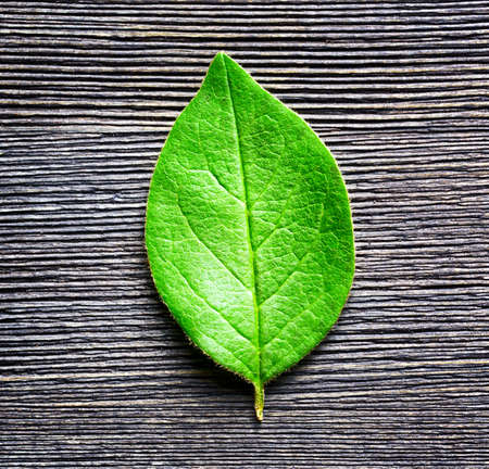 forest conservation: Green leaf lying on black wooden board. Natural and organic eco-friendly concept. Top view. Stock Photo