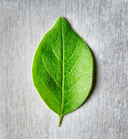 compatible: Green leaf lying in the rays of light on scratched metal. Top view. Modern technology and nature compatible. New technology on guard ecology. Eco-friendly concept. Stock Photo