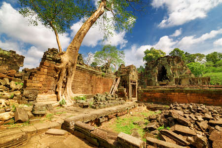 green been: Green tree growing among ruins of ancient Preah Khan temple in Angkor, Siem Reap, Cambodia. Amazing Preah Khan temple has been swallowed by jungle. Enigmatic Preah Khan is a popular tourist attraction Stock Photo