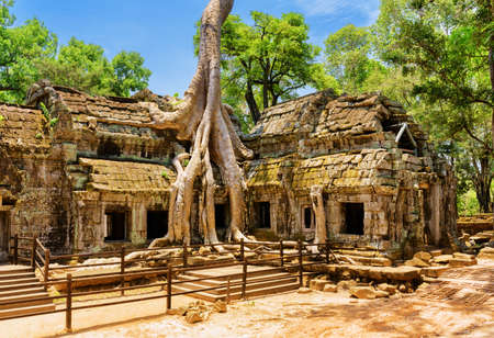 Ancient gallery of amazing Ta Prohm temple overgrown with trees. Mysterious ruins of Ta Prohm nestled among rainforest in Angkor, Siem Reap, Cambodia. Angkor is a popular tourist attraction. Stock Photo