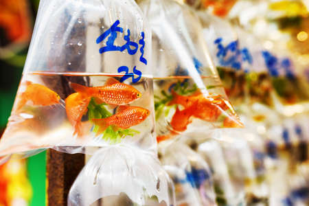 Goldfishes and different fishes for aquarium in plastic bags hanged on the wall in a pet shop selling in Hong Kong. Hong Kong is popular tourist destination of Asia. Stock Photo