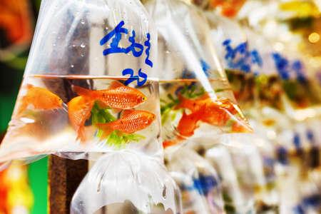 pez dorado: Goldfishes y diferentes peces de acuario en bolsas de plástico colgadas en la pared de una tienda de venta de mascotas en Hong Kong. Hong Kong es popular destino turístico de Asia.