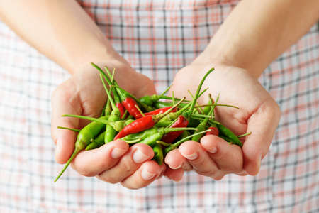 spicy cooking: Handful of red and green hot chili peppers in hands of young woman. Apron in background. Concept of cooking spicy dishes.