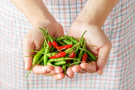 spicy cooking: Handful of red and green chili peppers in hands of young woman. Checkered apron in background. Concept of cooking spicy dishes. Stock Photo