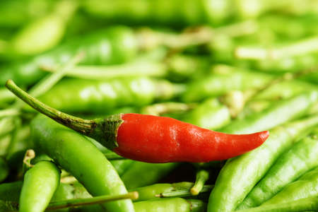 spicy cooking: Closeup view of one red hot chili pepper among a lot of green peppers. Concept of cooking spicy dishes.