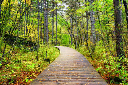 Wooden boardwalk across autumn forest in Jiuzhaigou nature reserve (Jiuzhai Valley National Park aka Valley of Nine Fortified Villages) of Sichuan province, China.