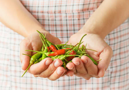 spicy cooking: Handful of red and green hot chili peppers in hands of young woman. Checkered apron in background. Concept of cooking spicy dishes.