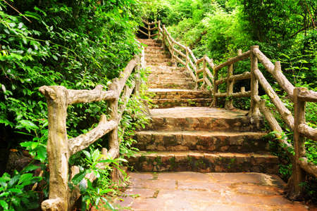 leading the way: Stone stairs among green foliage leading across scenic tropical woods. Way through forest in summer season. Stock Photo