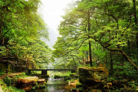 中国湖南省張り家界国家森林公園の美しい緑の森の中の川に架かる橋の景色。素晴らしい夏の風景。