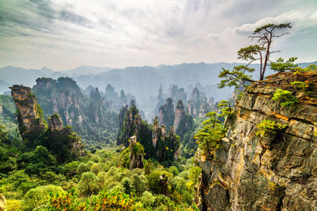 Amazing view of green tree growing on top of rock and natural quartz sandstone pillars of the Tianzi Mountains (Avatar Mountains) among woods in the Zhangjiajie National Forest Park, China.
