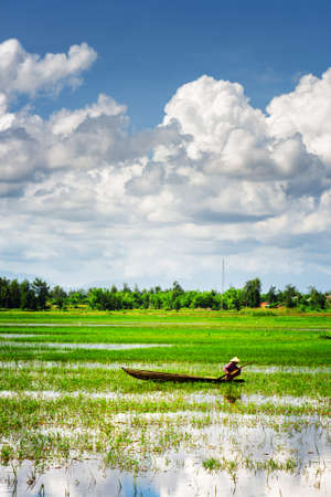 Rower wearing Vietnamese conical hat on wooden boat among green rice fields filled with water. Quang Nam Province, Vietnam. Quang Nam Province is a popular tourist destination of Asia.