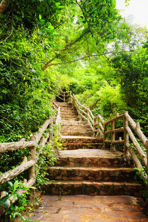 leading the way: Scenic stone stairs among green foliage leading across tropical woods. Way through forest in summer season.