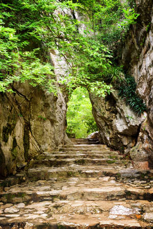 leading the way: Stone stairs leading up to gate in rocks among green foliage. Way to enigmatic tropical woods. Forest in summer season. Stock Photo