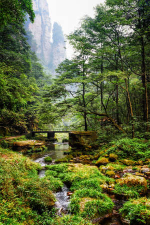 green park: Scenic view of river and bridge among green woods in the Zhangjiajie National Forest Park, Hunan Province, China. Steep cliffs are visible in background. Amazing summer landscape.