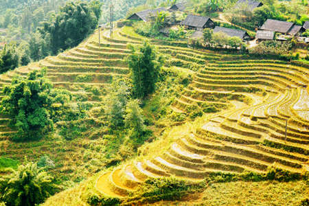 water plants: View of rice terraces and small village at highlands of Sapa District, Lao Cai Province, Vietnam. Sa Pa is a popular tourist destination of Asia. Stock Photo
