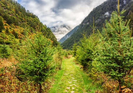 min: Scenic green walkway among woods in mountain gorge at Jiuzhai Valley National Park. Forest in the Min Mountains (Minshan), the Tibetan Plateau, Jiuzhaigou nature reserve, China. Beautiful landscape.