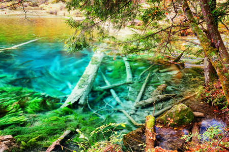 submerged: Amazing azure lake with submerged tree trunks among fall woods. Landscape with crystal clear water of the pond in autumn forest, Jiuzhaigou nature reserve (Jiuzhai Valley National Park), China. Stock Photo