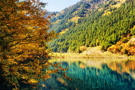 evergreen trees: Beautiful lake among colorful fall woods and mountains with evergreen forest in Jiuzhaigou nature reserve (Jiuzhai Valley National Park), China. Trees reflected in water. Amazing autumn landscape.