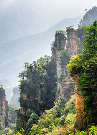 steep cliffs: Fantastic view of green trees growing on steep cliffs in the Tianzi Mountains (Avatar Mountains), the Zhangjiajie National Forest Park, China. Amazing wooded mountains are visible in background.