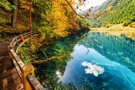 木の遊歩道は、秋の森と山の間で紺碧の透明な水と素晴らしい湖に沿ってリードします。秋の森と空水に反映。水中の木の幹の下部に表示されます