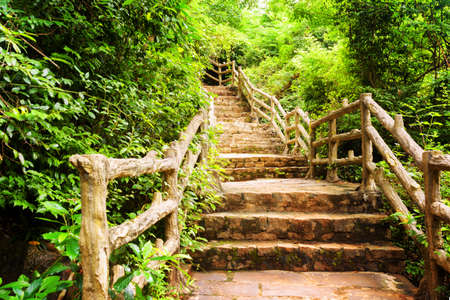 leading the way: Scenic stone stairs among green foliage leading across beautiful tropical woods. Way through forest in summer season.
