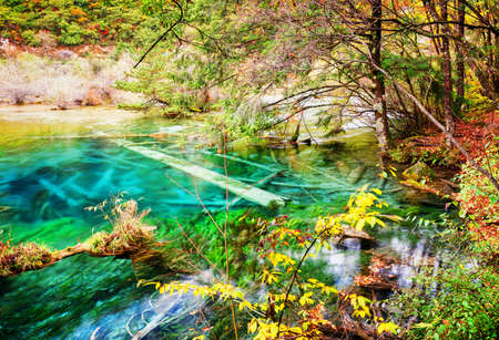 submerged: Azure lake with submerged tree trunks among fall woods. Beautiful landscape with crystal clear water of the pond in autumn forest. Jiuzhaigou nature reserve (Jiuzhai Valley National Park), China. Stock Photo