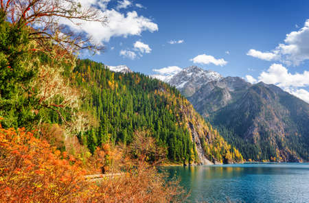 long lake: Amazing view of the Long Lake among colorful fall woods and mountains in Jiuzhaigou nature reserve (Jiuzhai Valley National Park), China. Scenic snowy peaks and blue sky are visible in background.