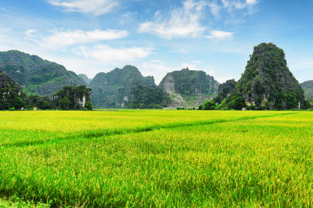 destination scenic: Beautiful view of bright green rice fields among scenic karst mountains at Ninh Binh Province, Vietnam. Blue sky with clouds in background. Ninh Binh Province is a popular tourist destination of Asia. Stock Photo