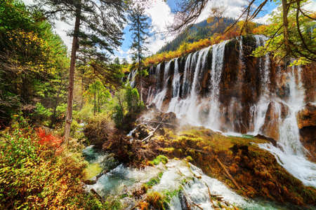 lang: Amazing view of the Nuo Ri Lang Waterfall (Nuorilang) among colorful fall woods in Jiuzhaigou nature reserve (Jiuzhai Valley National Park) of Sichuan province, China. Fantastic sunny autumn landscape