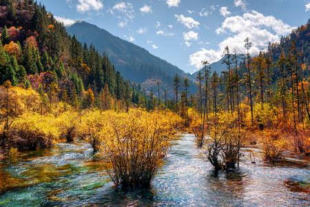 Erstaunliche Fluss mit kristallklarem Wasser unter Herbst Wald und malerischen bewaldeten Bergen im Rize-Tal in Jiuzhaigou Naturschutzgebiet (Jiuzhai Valley National Park), China. Schöne Herbstlandschaft.
