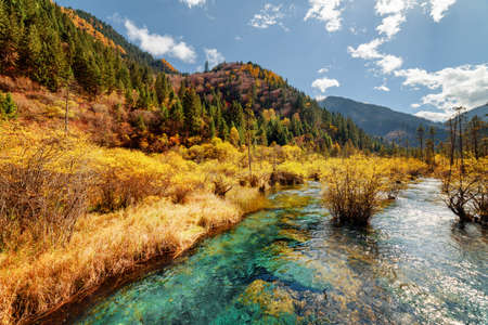 crystal clear: Scenic river with crystal clear water among fall forest and amazing wooded mountains at the Rize Valley in Jiuzhaigou nature reserve (Jiuzhai Valley National Park), China. Beautiful autumn landscape.
