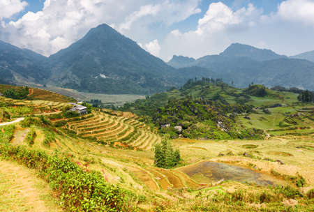 lien: View of rice terraces in the Hoang Lien Mountains of Sapa District, Lao Cai Province, Vietnam. Sa Pa is a popular tourist destination of Asia.