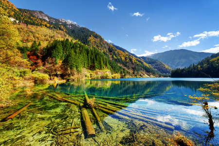 water fall: Amazing view of the Arrow Bamboo Lake with crystal water among mountains and colorful fall woods, Jiuzhaigou nature reserve (Jiuzhai Valley National Park), China. Submerged tree trunks at the bottom. Stock Photo