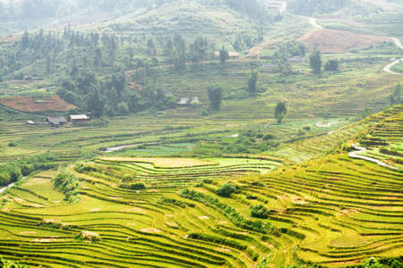 destination scenic: Scenic view of green terraced rice fields at highlands of Sapa District, Lao Cai Province, Vietnam. Sa Pa is a popular tourist destination of Asia.