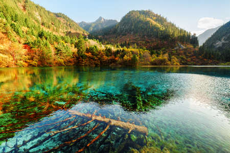 submerged: Amazing view of submerged fallen trees in azure crystal clear water of the Five Flower Lake (Multicolored Lake) among mountains in Jiuzhaigou nature reserve, China. Autumn forest reflected in water.