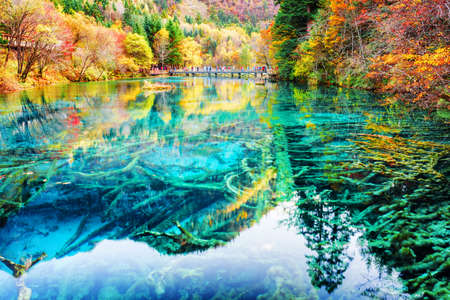 submerged: Wonderful view of submerged tree trunks in azure crystal clear water of the Five Flower Lake (Multicolored Lake) among autumn woods in Jiuzhaigou nature reserve (Jiuzhai Valley National Park), China. Stock Photo
