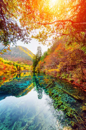 Amazing view of the Five Flower Lake (Multicolored Lake) among fall woods in Jiuzhaigou nature reserve, China. Submerged tree trunks are visible in azure water. The sun is shining through foliage.